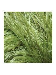 Пряжа Alize Decofur 1369 (зеленый)